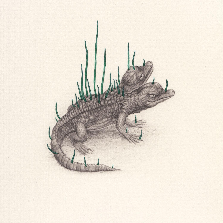 The-Growing-by-Nick-Sheehy