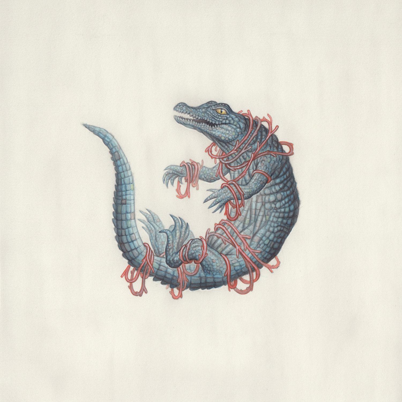 the-crocodile-by-nick-sheehy.jpg