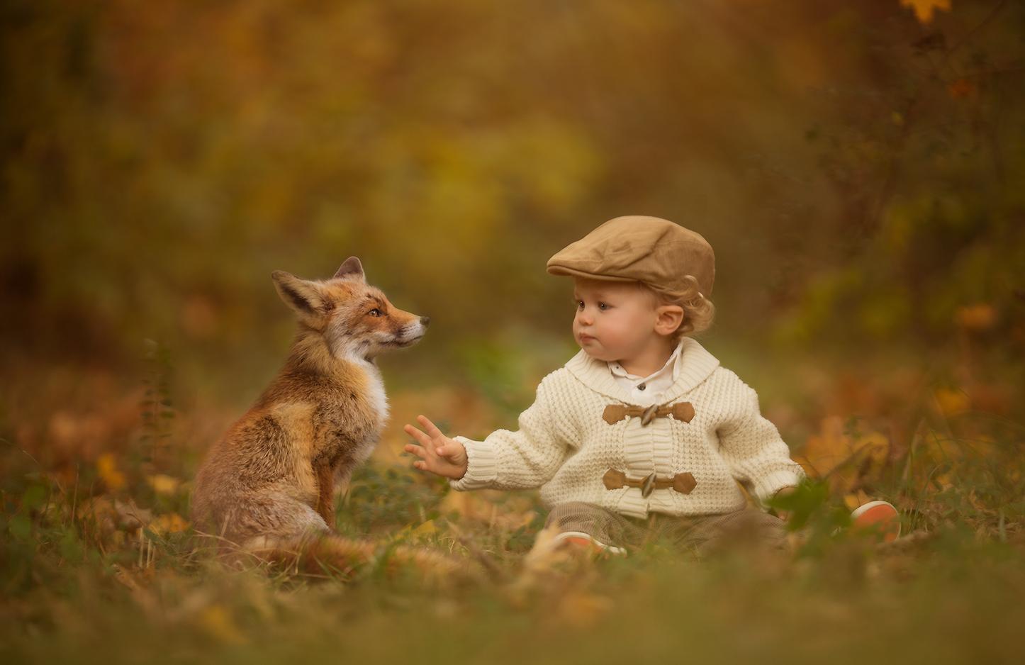 fox2.jpg