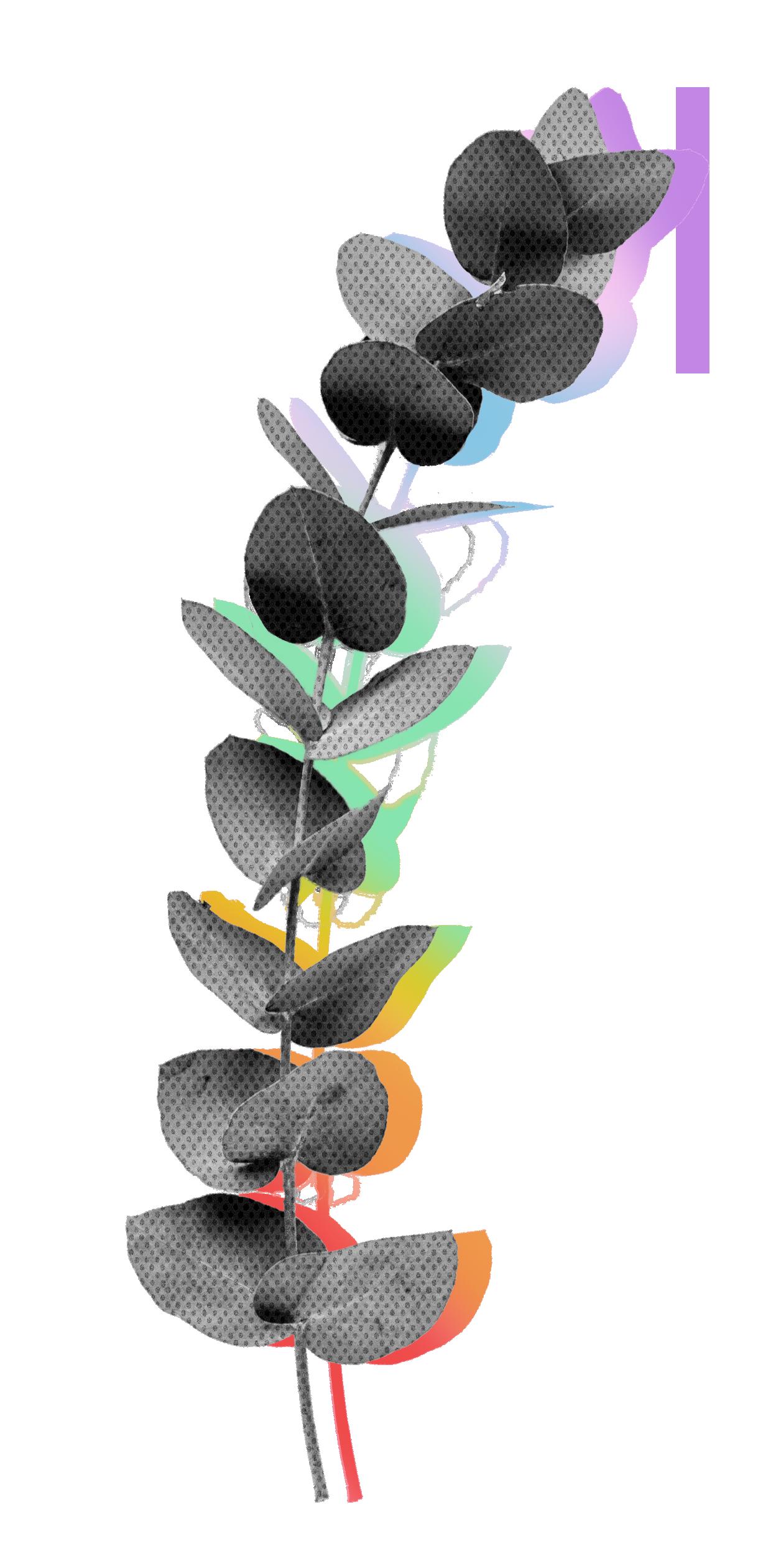 eucalypt.png