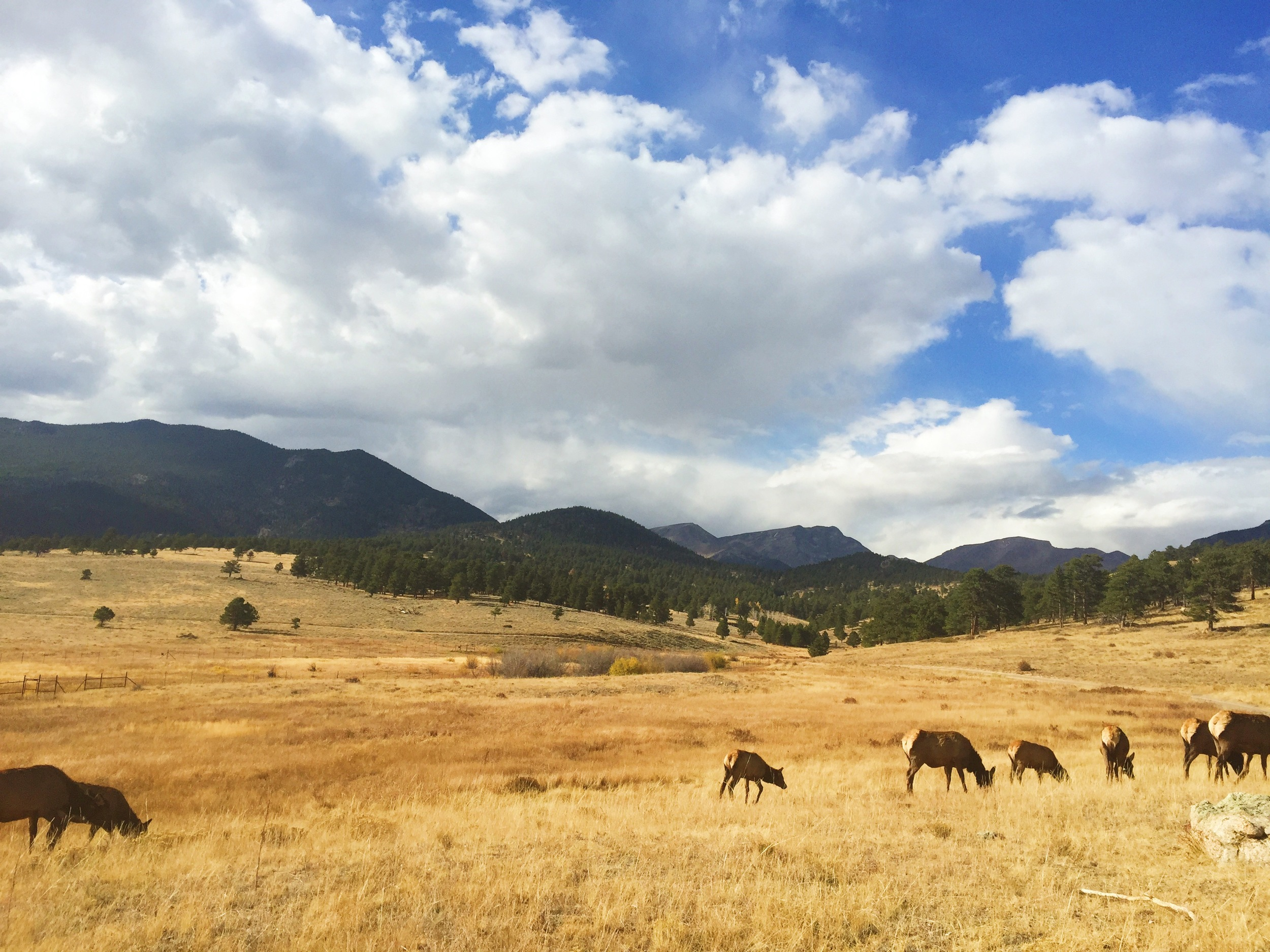 I came across some Elk and literally thought I was in a National Geographic magazine.