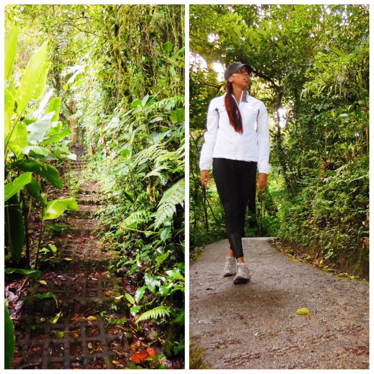 sky walk tour monteverde cloud forest.jpg