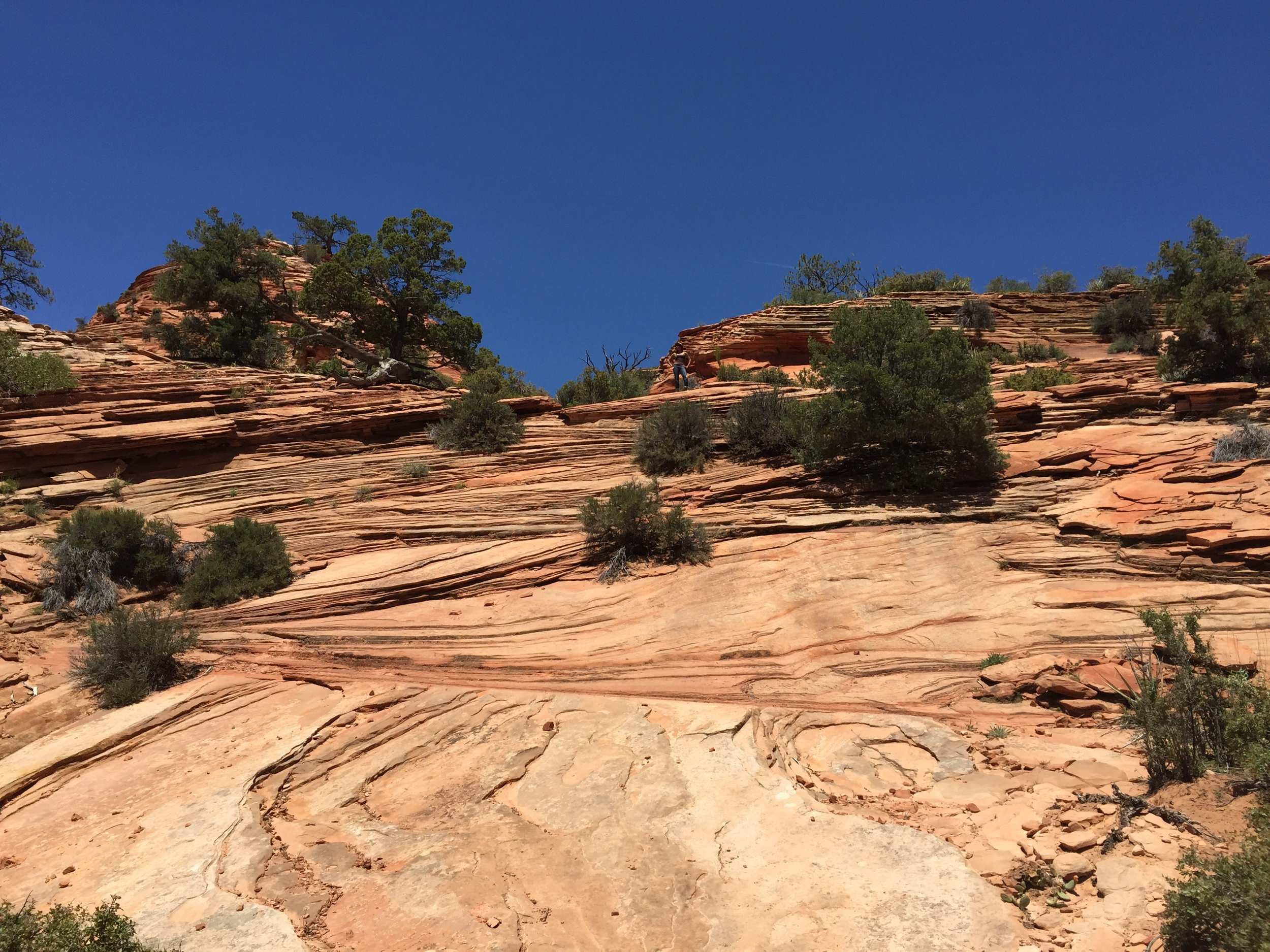 what to do at zion national park