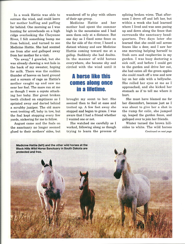 Horse Sanctuary 4.jpg