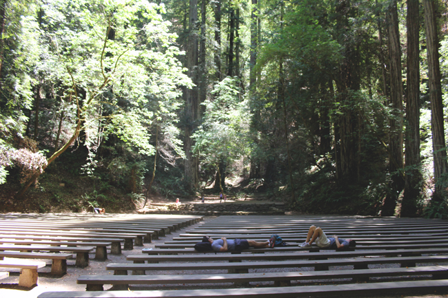 redwoods lazy