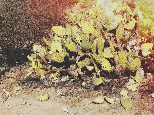 cactushike
