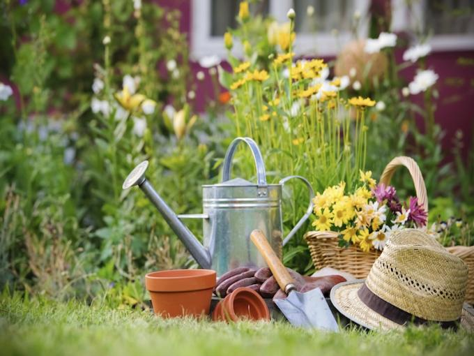 gartenpflanzen_148949232.jpg