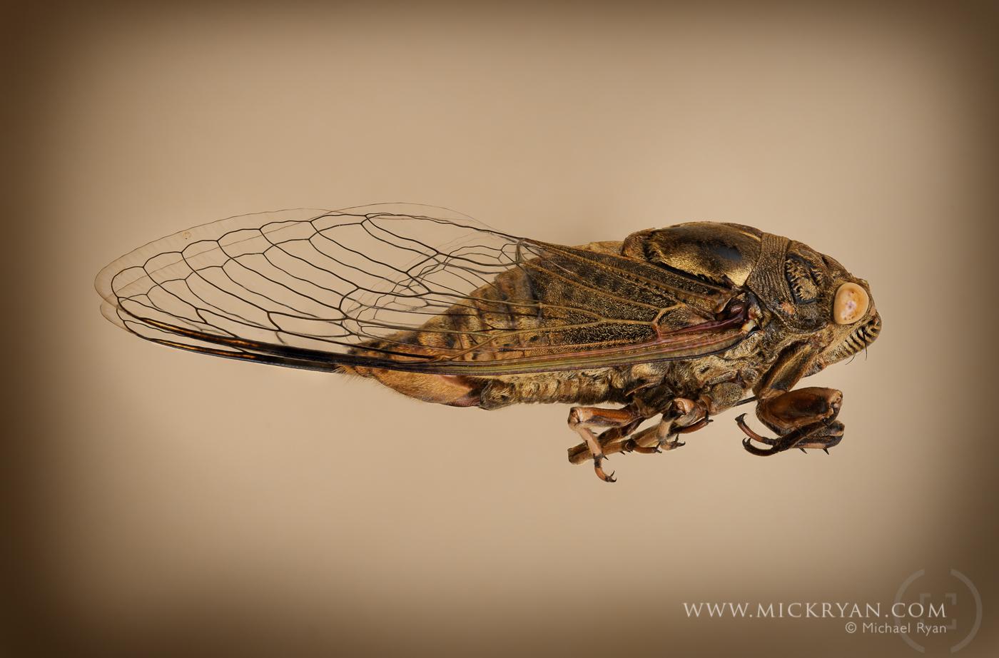 Cicada Portraits-1559-Edit-Edit.jpg