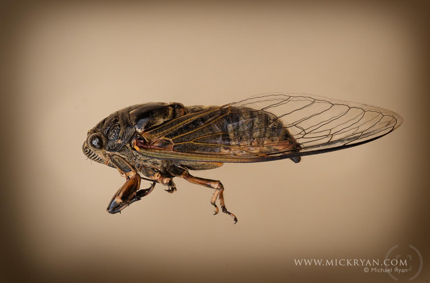 Cicada Portraits-1567-Edit-Edit.jpg