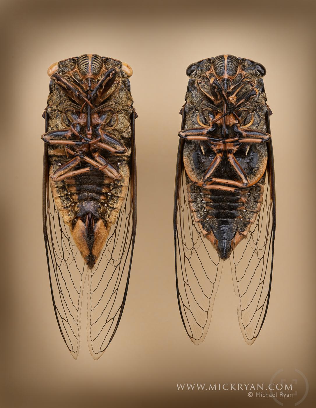Cicada Portraits-1543-Edit.jpg