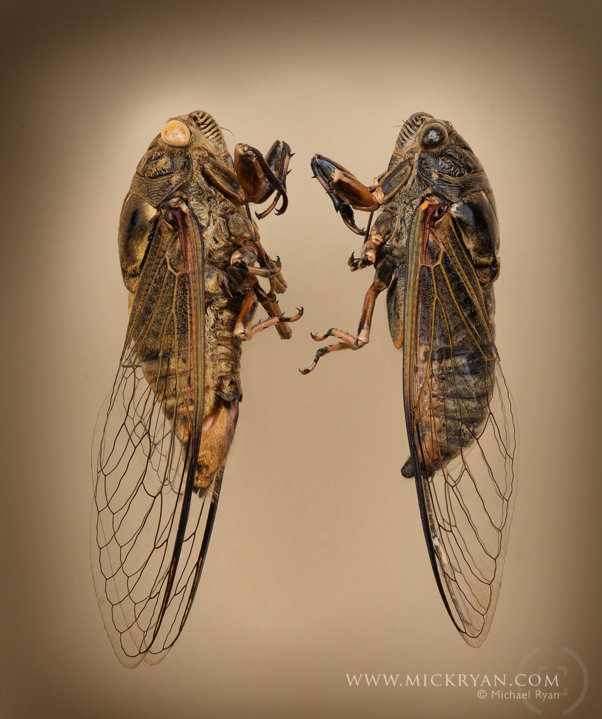 Cicada Portraits-1575-Edit-2.jpg