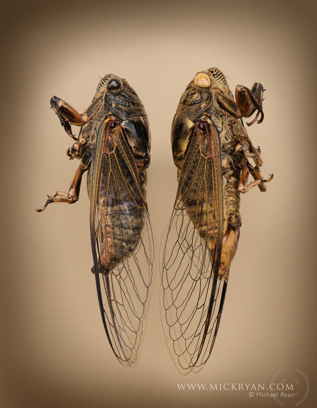Cicada Portraits-1583-Edit.jpg