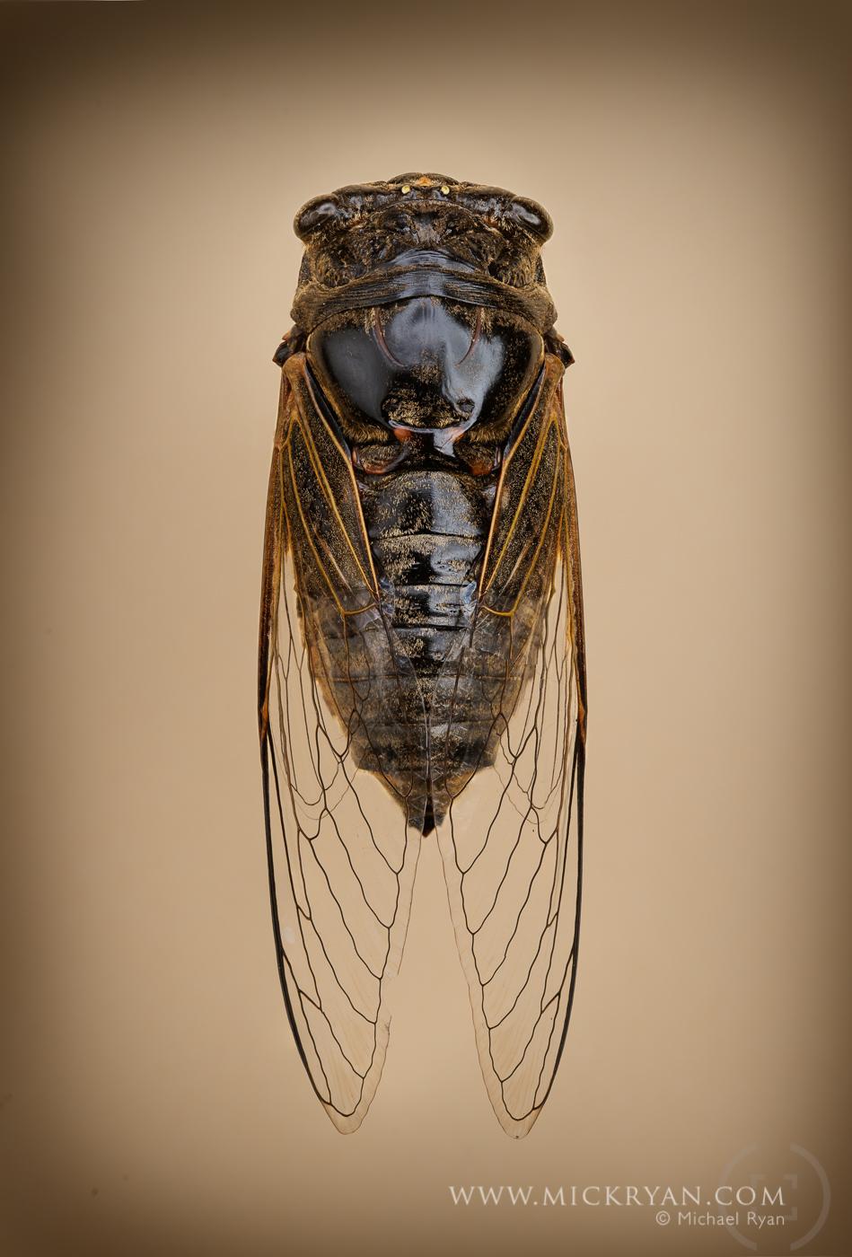 Cicada Portraits-1714-Edit.jpg