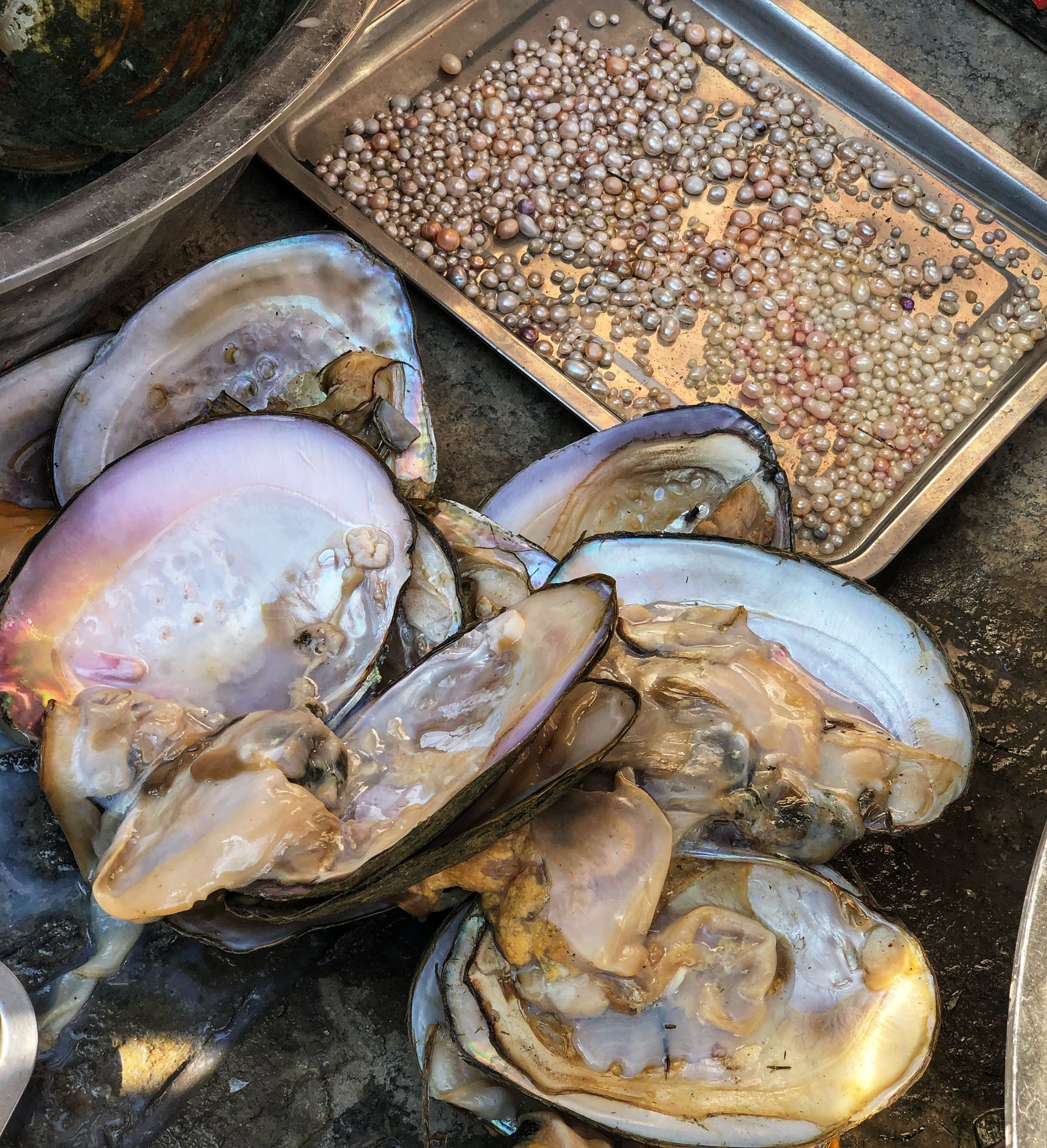 Oysters with pearls.