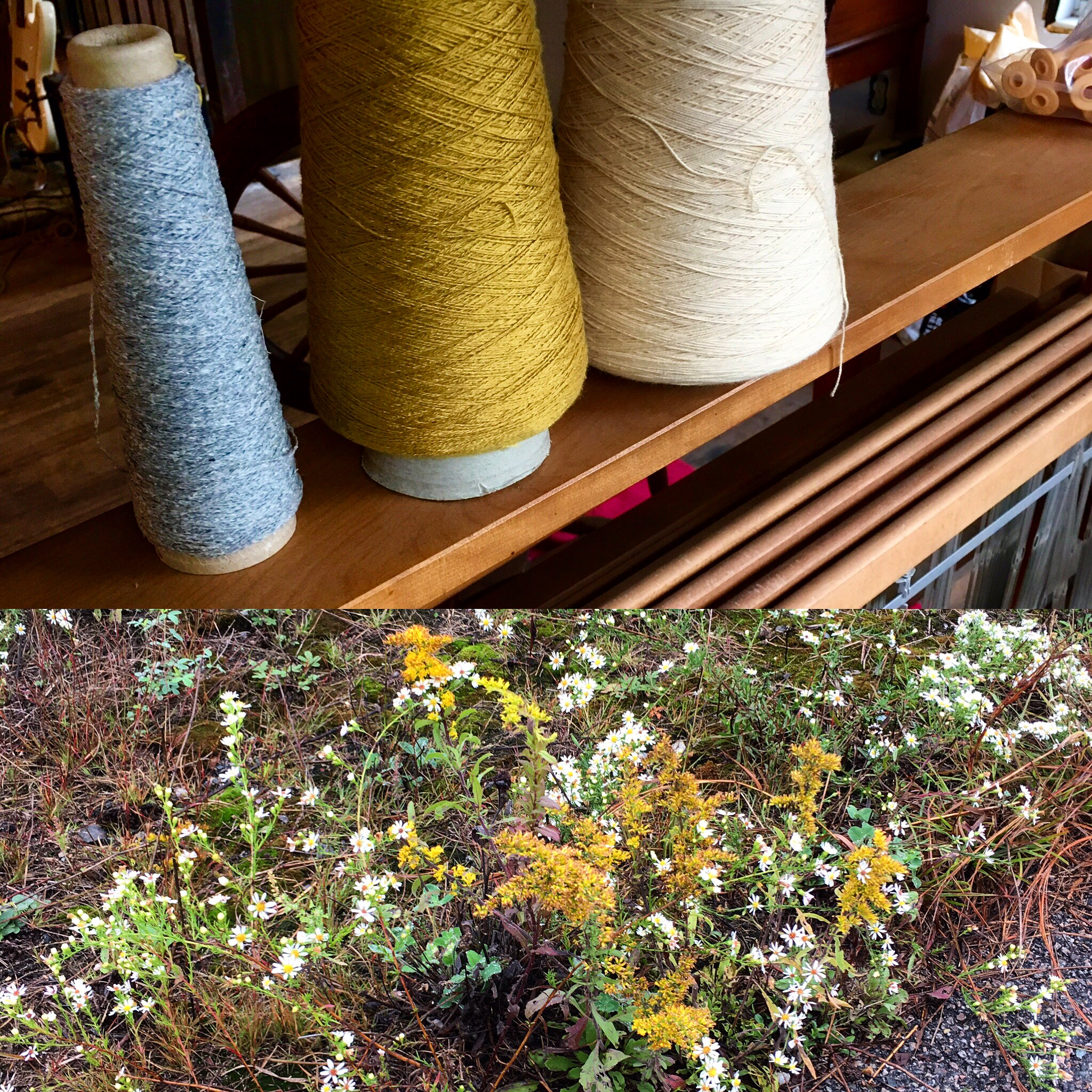 Top: a few yarns from my stash Bottom: some goldenrod & other flowers peeking out of the pavement.