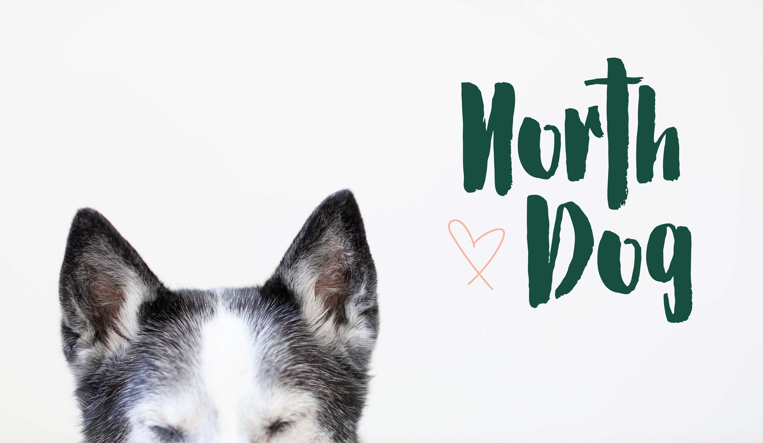 North Dog Logo and Branding Design by AllieMarie Design