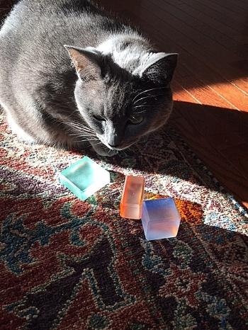 ZonnenBoxen and grey cat.