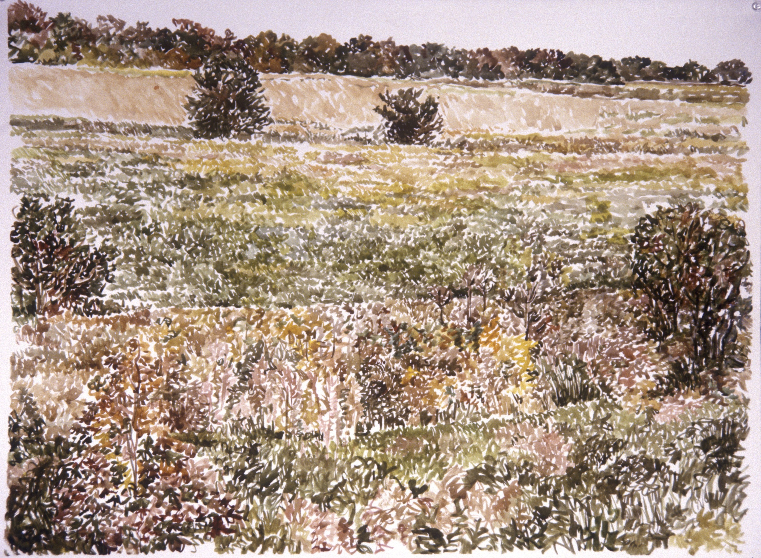 """Field in Suffolk VA""  Watercolor 22X30"