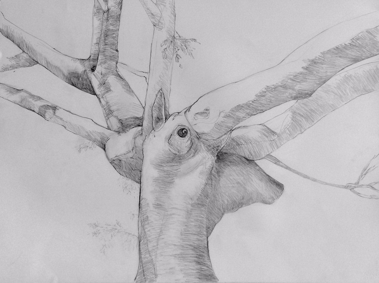 """The Giraffe""  Graphite on Paper"
