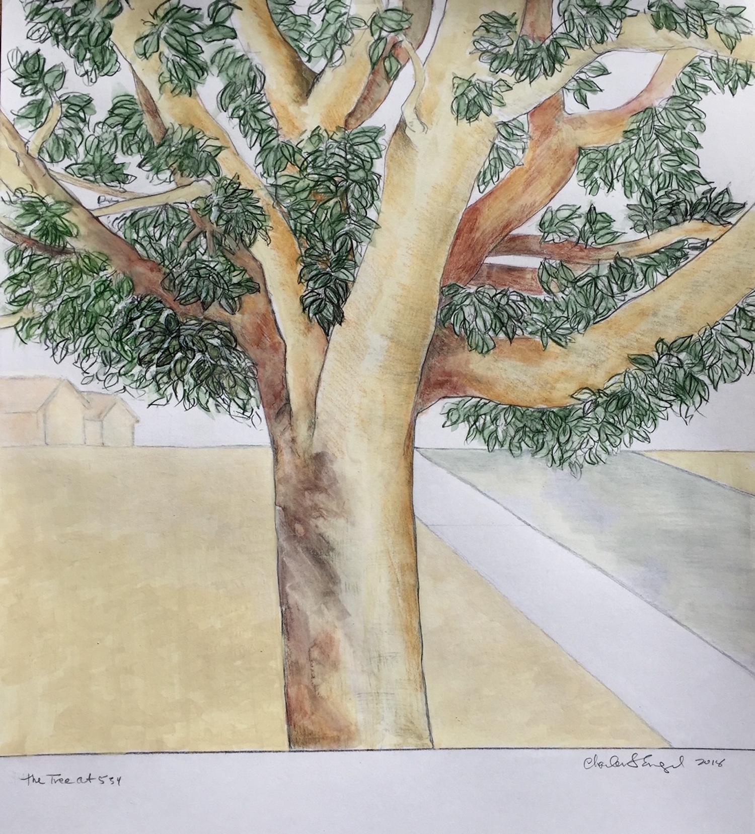 """Ficus"""