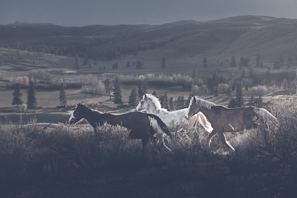 Horses, Osoyoos,B.C.Photo: Troy Moth