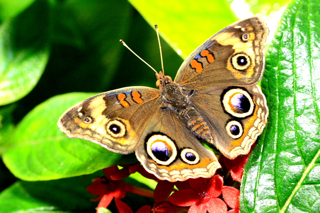 200702_2_amnh_butterfly_2_1880801527_o.jpg