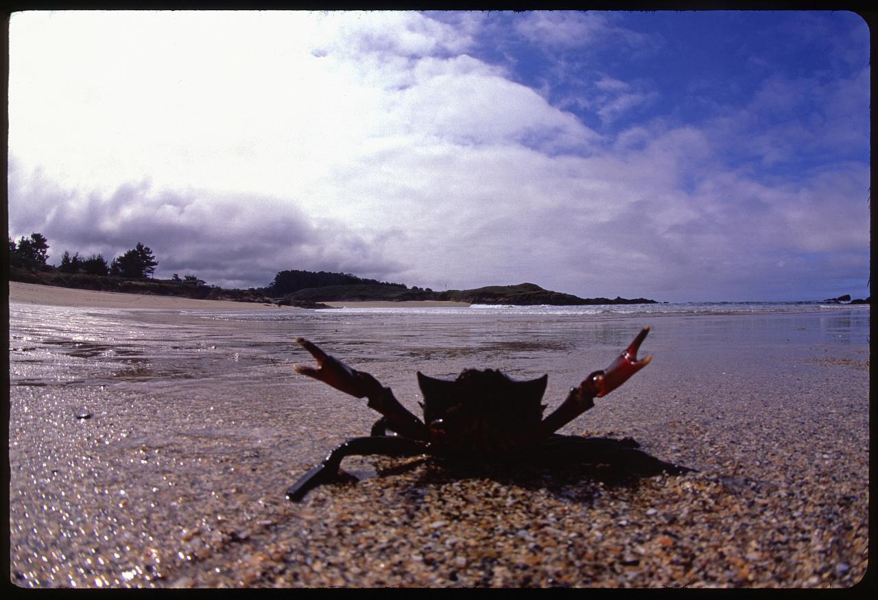 bean-hollow-crab-1_2591284509_o.jpg