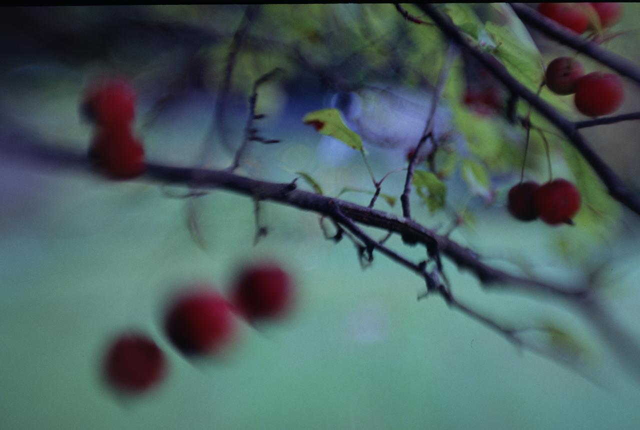 berry-blur_2964056873_o.jpg