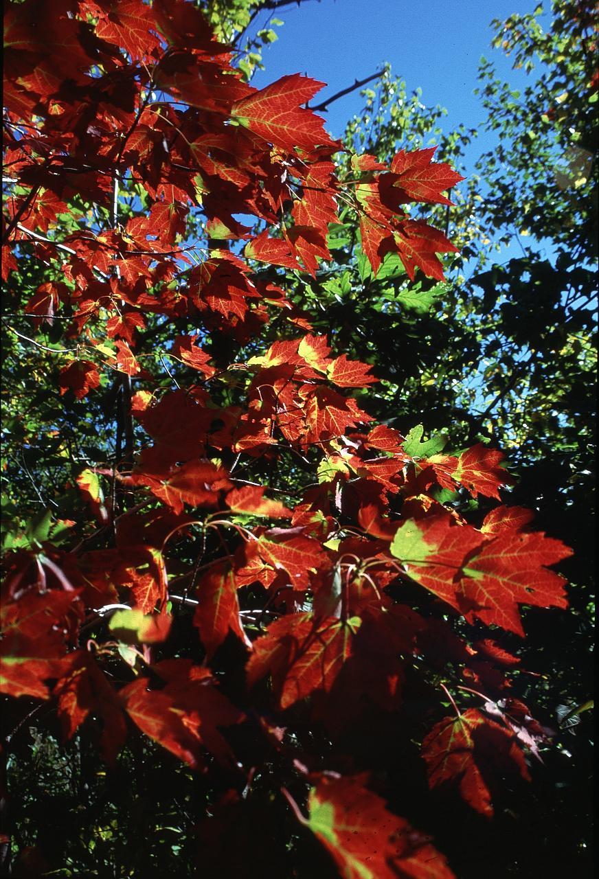 breakneck-leaves-1_2466805776_o.jpg