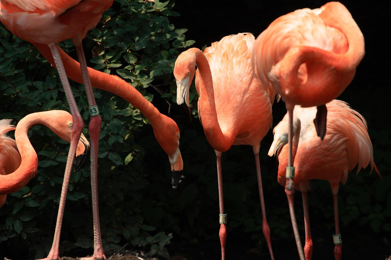 bronx-zoo-madagascar-8_2754779668_o.jpg