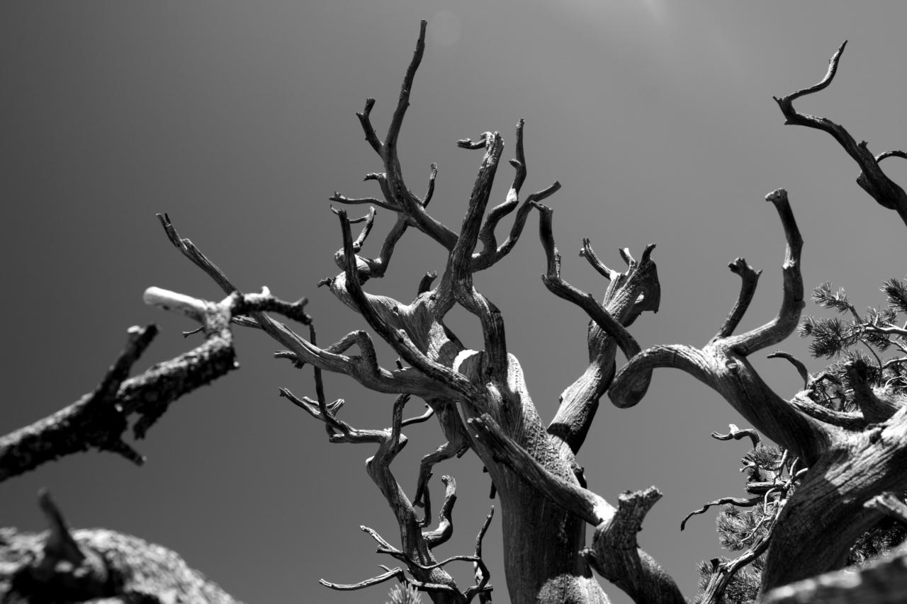 bryce-canyon-6_1317098873_o.jpg