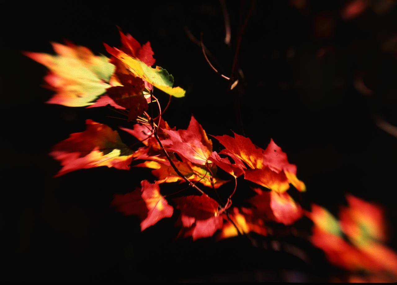 foliage-overhead-2_3007456226_o.jpg
