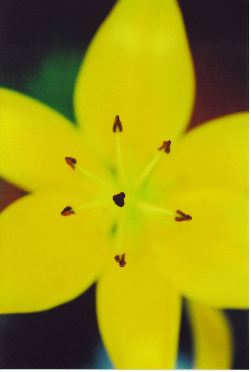 johnsflower1_1866939447_o.jpg