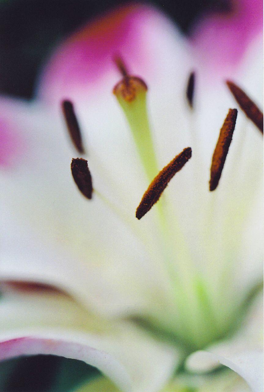 johnsflower2_1866939907_o.jpg