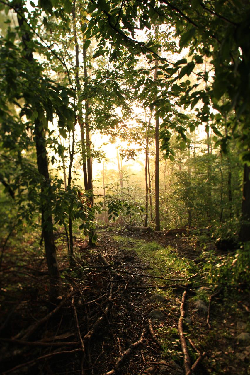 the-morning-path_3846948971_o.jpg
