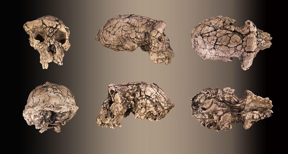 Ancient Skulls
