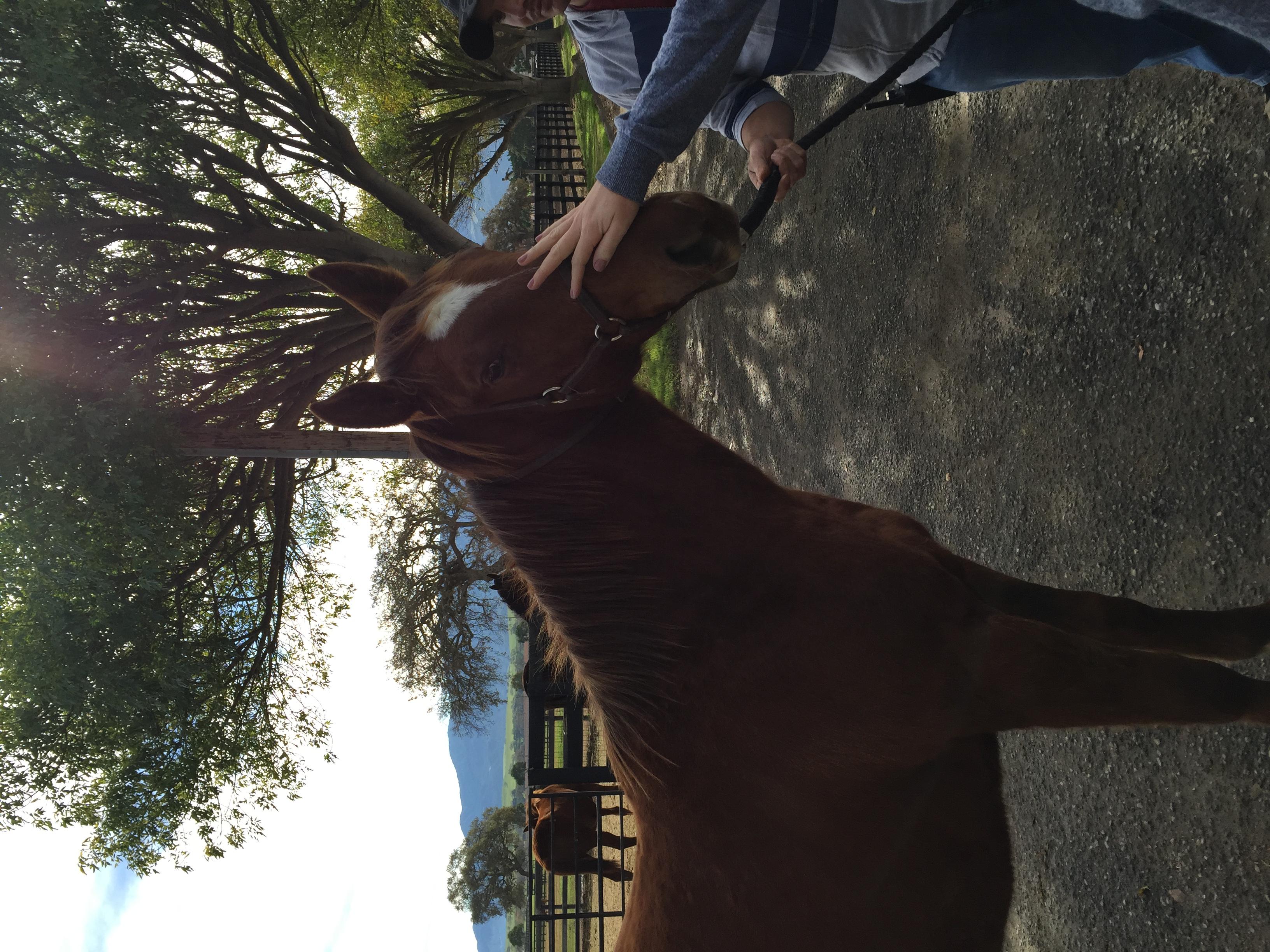 brownhorse.jpg