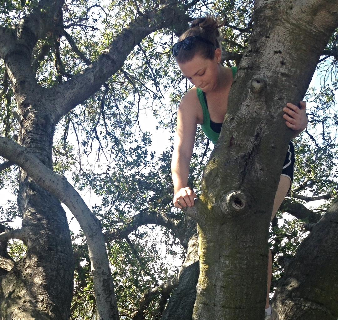treeclimber.jpg
