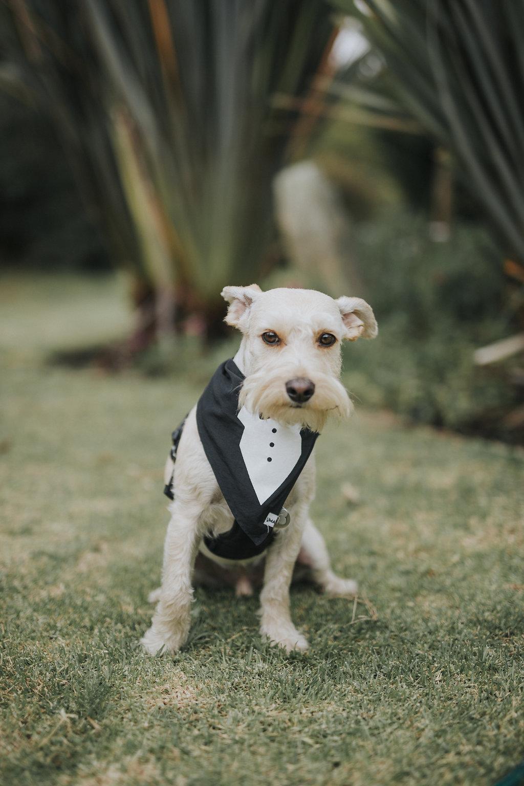 juliethbravo-wedding-planner-dogs-perros-bodas-bogota-miami.jpg