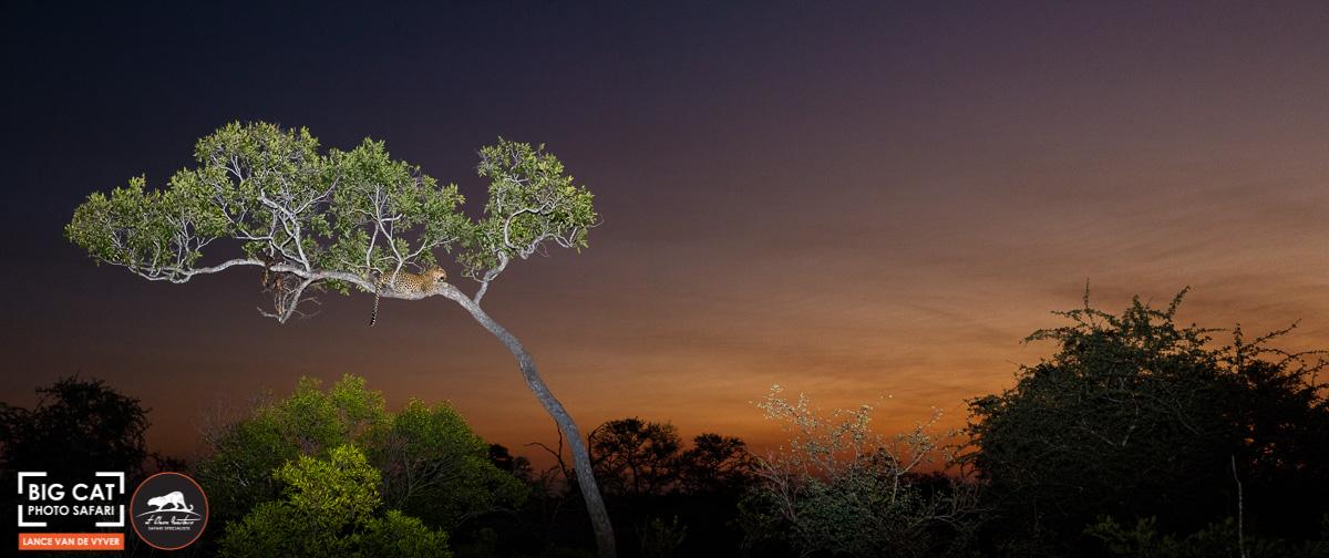Lance van de Vyver - Tree-1.jpg