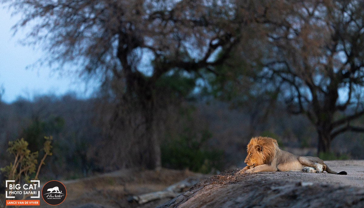 Lance van de Vyver - Tree-12.jpg