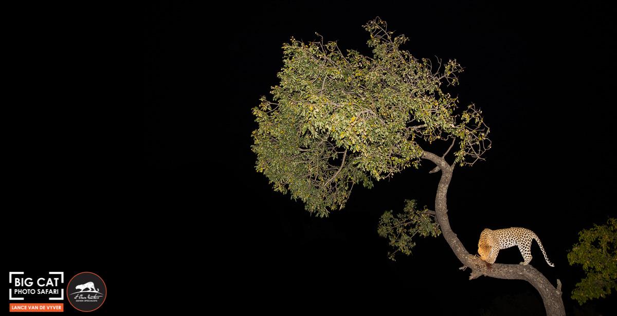 Lance van de Vyver - Tree-20.jpg