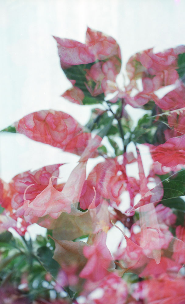 102415 - Conservatory_400H_09.JPG