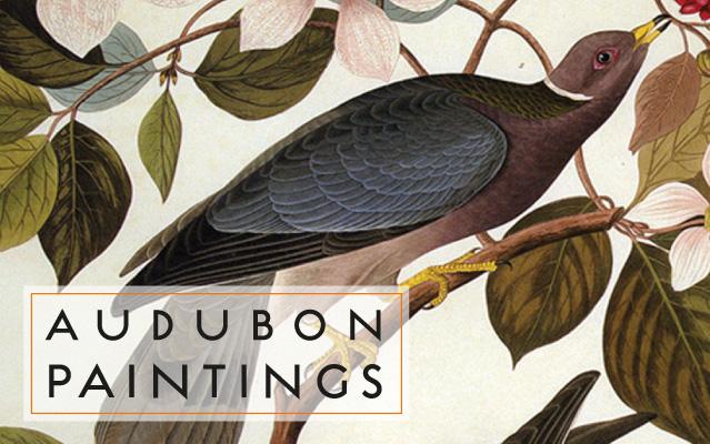 Audubon Paintings