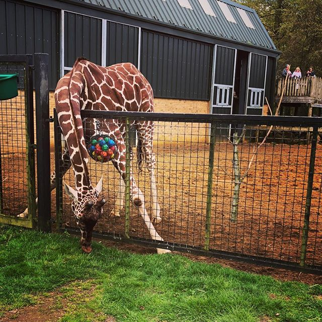 Great afternoon at #zslwhipsnadezoo