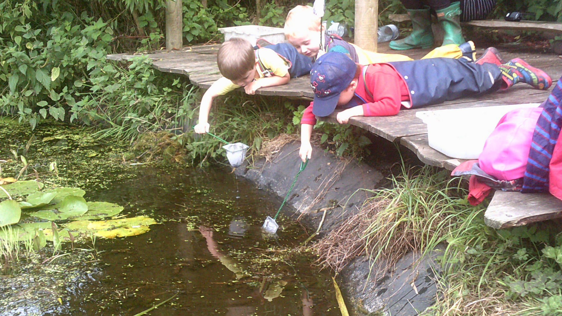 Pond dipping in the Den