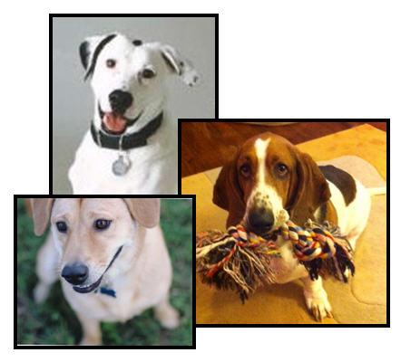 bizologie_Dogs