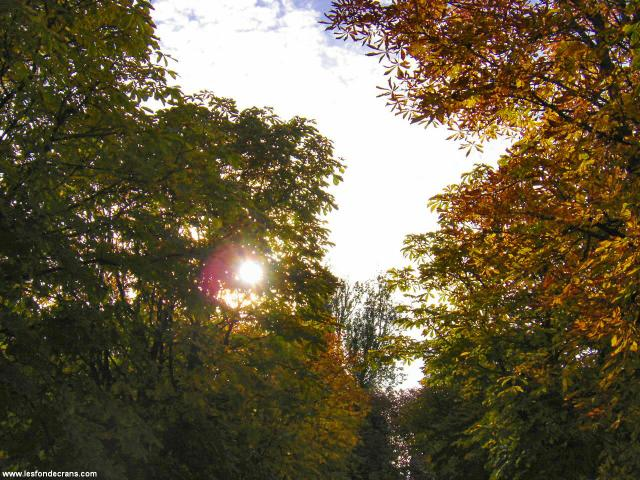 normal_Autumn-trees-and-colors-017