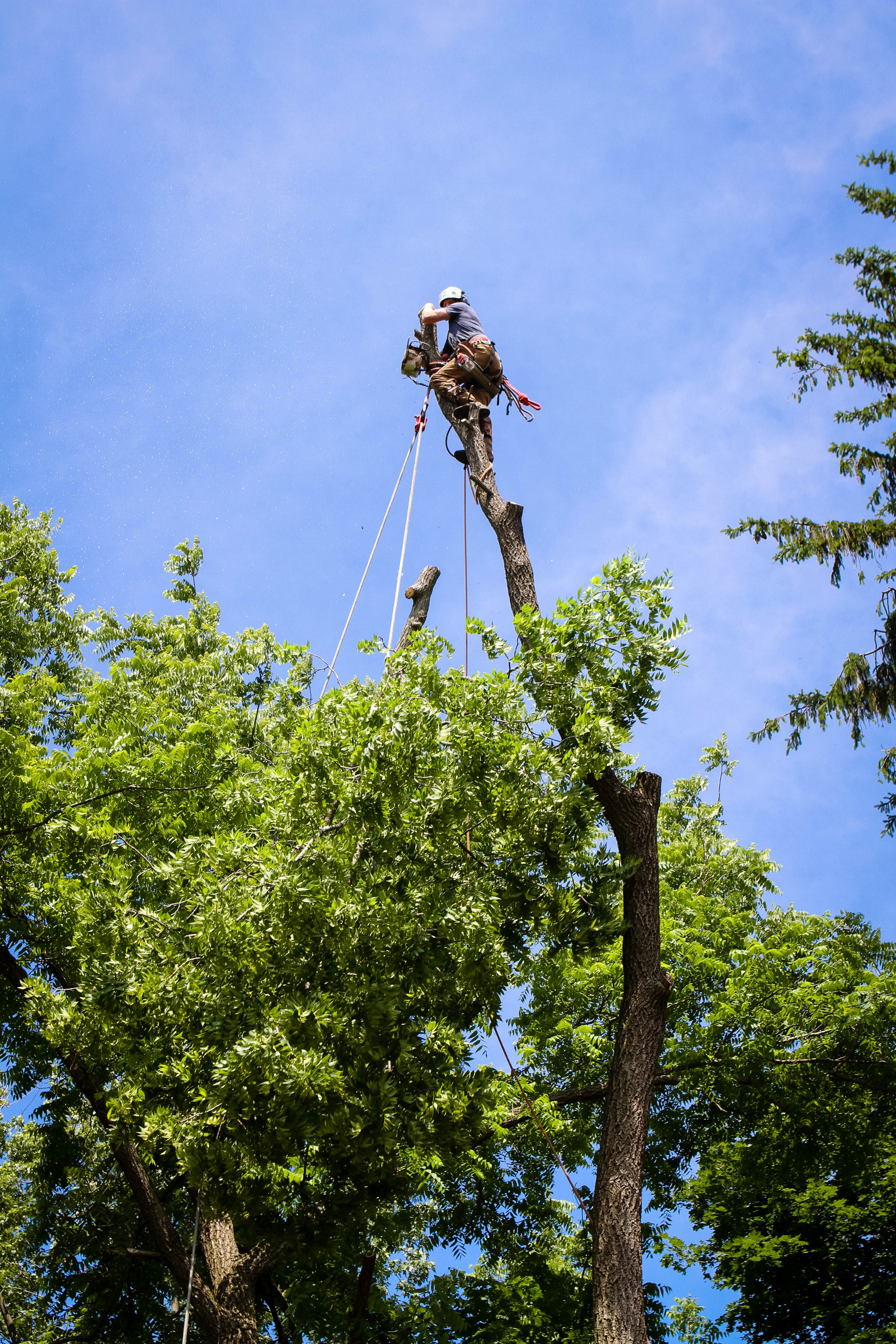 Local, Professional, Quality Tree Care.
