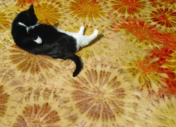 11b-Digitally woven fossil coral rug.jpg